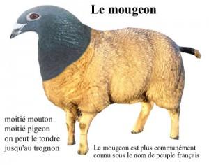 Moitié pigeon moitié mouton