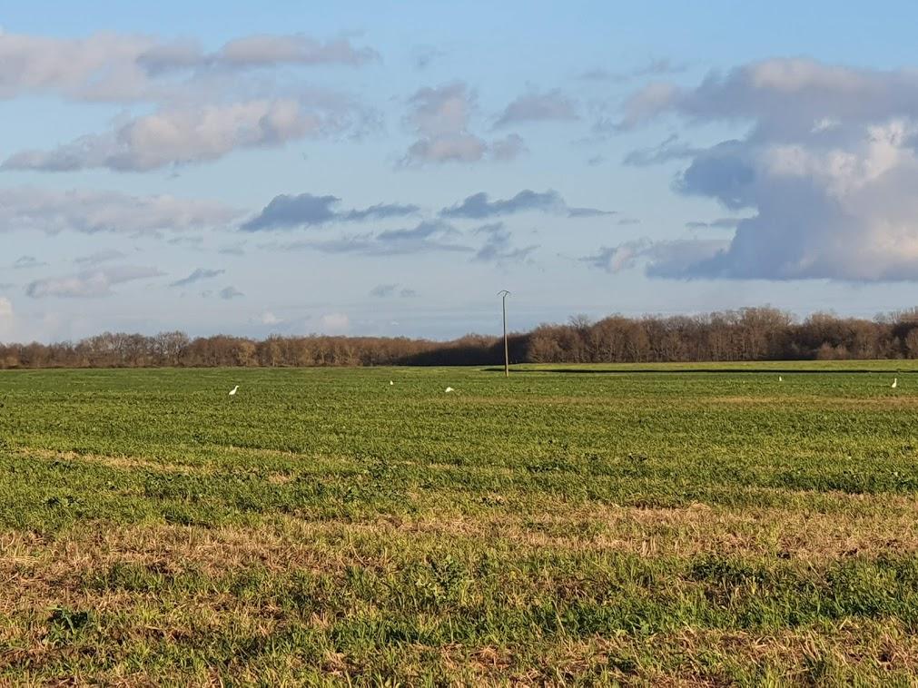 Pourquoi les promoteurs éoliens louent-ils la terre  au lieu de l'acheter ?